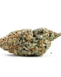 Violator Kush Marijuana Strain