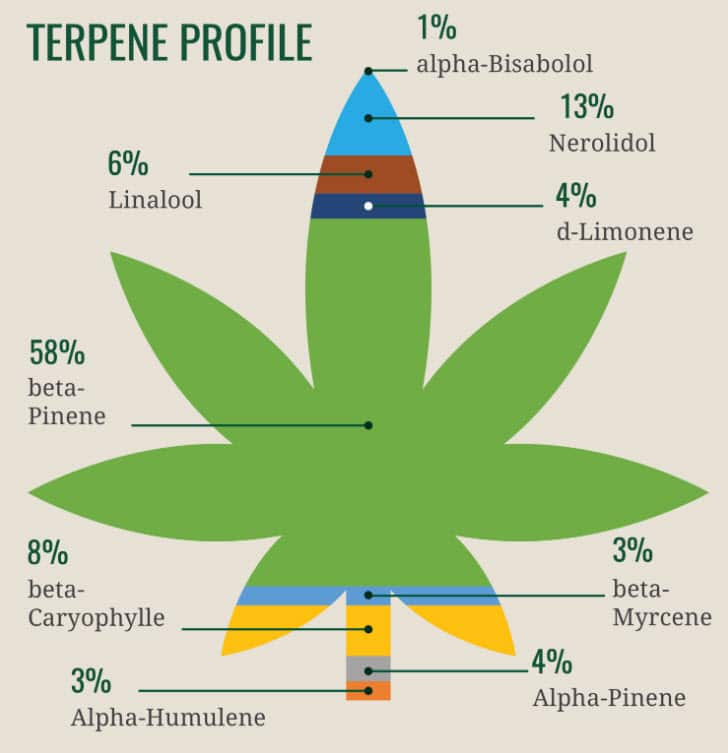 What are Terpenes and Why its Important When Using Vape Pens