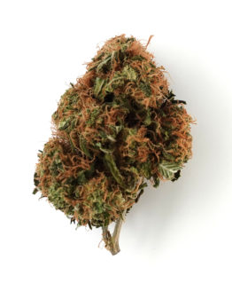 Wasabi Cannabis